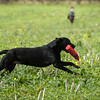 Cotswold Gundogs Shoot Skills Training Day 7d-162