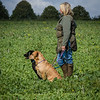 Cotswold Gundogs Shoot Skills Training Day 7d-188