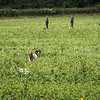 Cotswold Gundogs Shoot Skills Training Day 7d-140