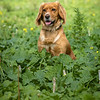 Cotswold Gundogs Shoot Skills Training Day 7d-101