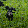 Cotswold Gundogs Shoot Skills Training Day 7d-73