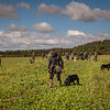 Cotswold Gundogs Shoot Skills Training Day 5d-13