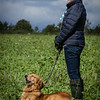 Cotswold Gundogs Shoot Skills Training Day 7d-197