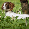 Cotswold Gundogs Shoot Skills Training Day 7d-89