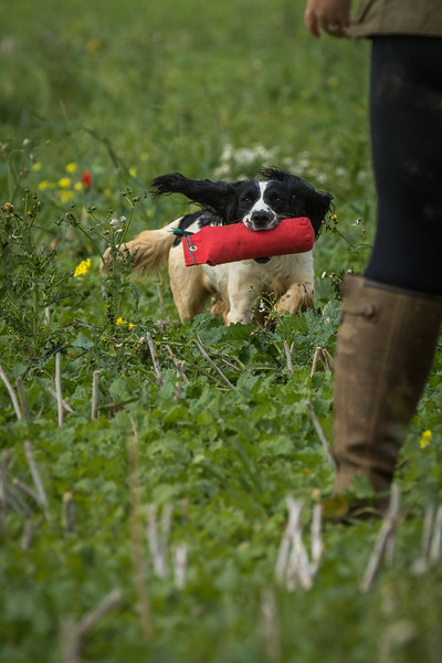 Cotswold Gundogs Shoot Skills Training Day 7d-173