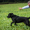 Cotswold Gundogs Shoot Skills Training Day 7d-235