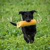 Cotswold Gundogs Shoot Skills Training Day 7d-250