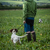Cotswold Gundogs Shoot Skills Training Day 7d-51