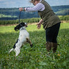 Cotswold Gundogs Shoot Skills Training Day 7d-52