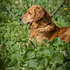 Cotswold Gundogs Shoot Skills Training Day 7d-194