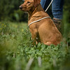 Cotswold Gundogs Shoot Skills Training Day 7d-202