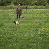Cotswold Gundogs Shoot Skills Training Day 7d-139