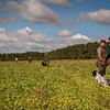 Cotswold Gundogs Shoot Skills Training Day 5d-12