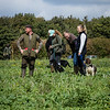 Cotswold Gundogs Shoot Skills Training Day 7d-177