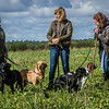 Cotswold Gundogs Shoot Skills Training Day 7d-36