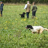 Cotswold Gundogs Shoot Skills Training Day 7d-164