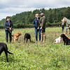 Cotswold Gundogs Shoot Skills Training Day 7d-129