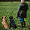 Cotswold Gundogs Shoot Skills Training Day 7d-191