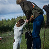 Cotswold Gundogs Shoot Skills Training Day 7d-12