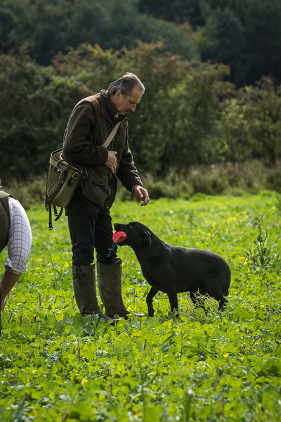 Cotswold Gundogs Shoot Skills Training Day 7d-232