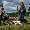 Cotswold Gundogs Shoot Skills Training Day 7d-7
