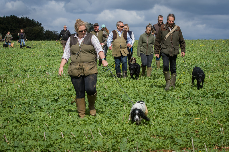 Cotswold Gundogs Shoot Skills Training Day 7d-180
