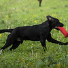 Cotswold Gundogs Shoot Skills Training Day 7d-157