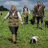 Cotswold Gundogs Shoot Skills Training Day 7d-181