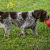 Cotswold Gundogs Shoot Skills Training Day 7d-154
