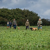 Cotswold Gundogs Shoot Skills Training Day 7d-182