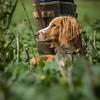 Cotswold Gundogs Shoot Skills Training Day 7d-203