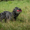 N&BTA Advanced Spaniel Day-138