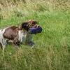N&BTA Advanced Spaniel Day-132