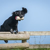 N&BTA Advanced Spaniel Day-126