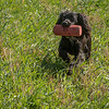 N&BTA Advanced Spaniel Day-208