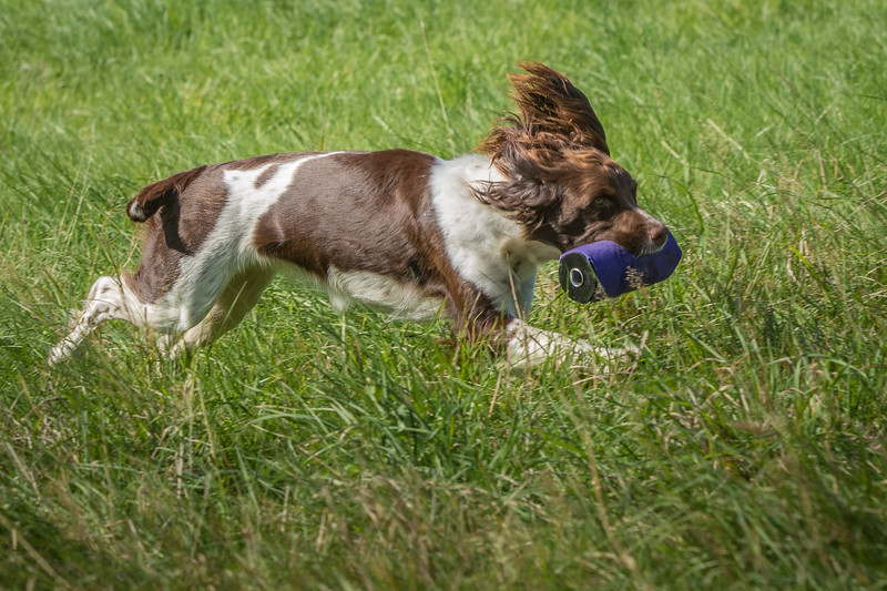 N&BTA Advanced Spaniel Day-133