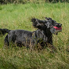 N&BTA Advanced Spaniel Day-139