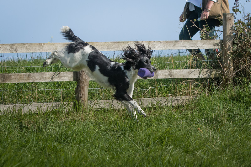 N&BTA Advanced Spaniel Day-101