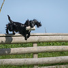 N&BTA Advanced Spaniel Day-92