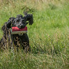 N&BTA Advanced Spaniel Day-135