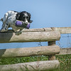 N&BTA Advanced Spaniel Day-124