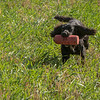N&BTA Advanced Spaniel Day-207