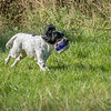 N&BTA Advanced Spaniel Day-130
