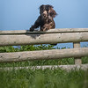N&BTA Advanced Spaniel Day-107