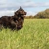Northwick Estate Spaniel Live Shoot Over Day-183