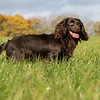 Northwick Estate Spaniel Live Shoot Over Day-196