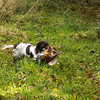 Northwick Estate Spaniel Live Shoot Over Day-171