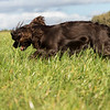 Northwick Estate Spaniel Live Shoot Over Day-185
