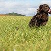 Northwick Estate Spaniel Live Shoot Over Day-182