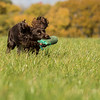 Northwick Estate Spaniel Live Shoot Over Day-190